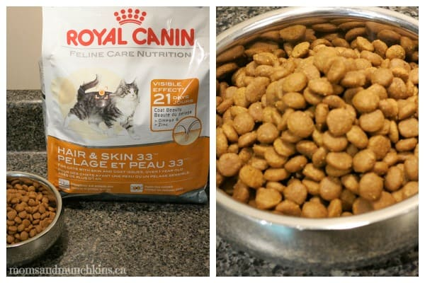 What Is The Best Dry Cat Food For Allergies