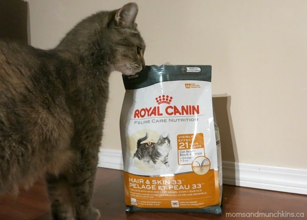 Cat Food for Senior Cats