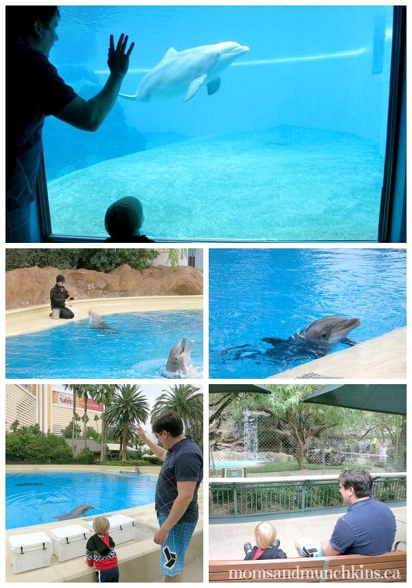 Mirage Secret Garden Dolphin Habitat Moms Munchkins