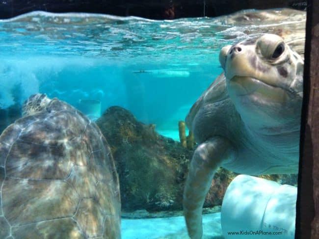 SEA LIFE Grapevine Aquarium