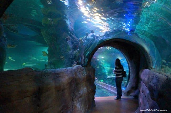 Sea Life Grapevine Aquarium Family Travel Tips