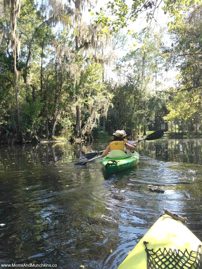 Kayaking with Alligators