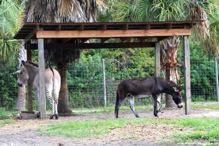 Wild Florida Park