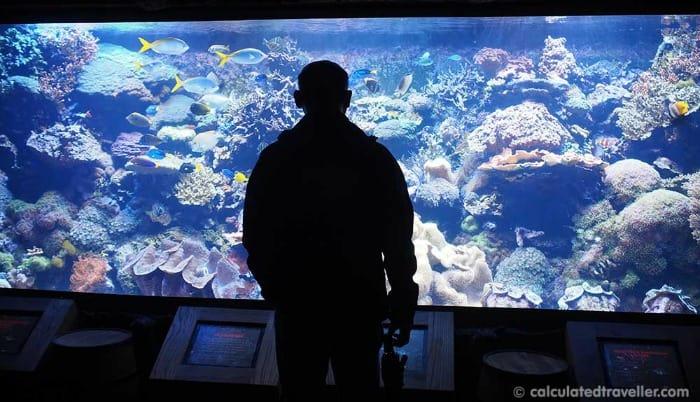 Downtown Aquarium Houston