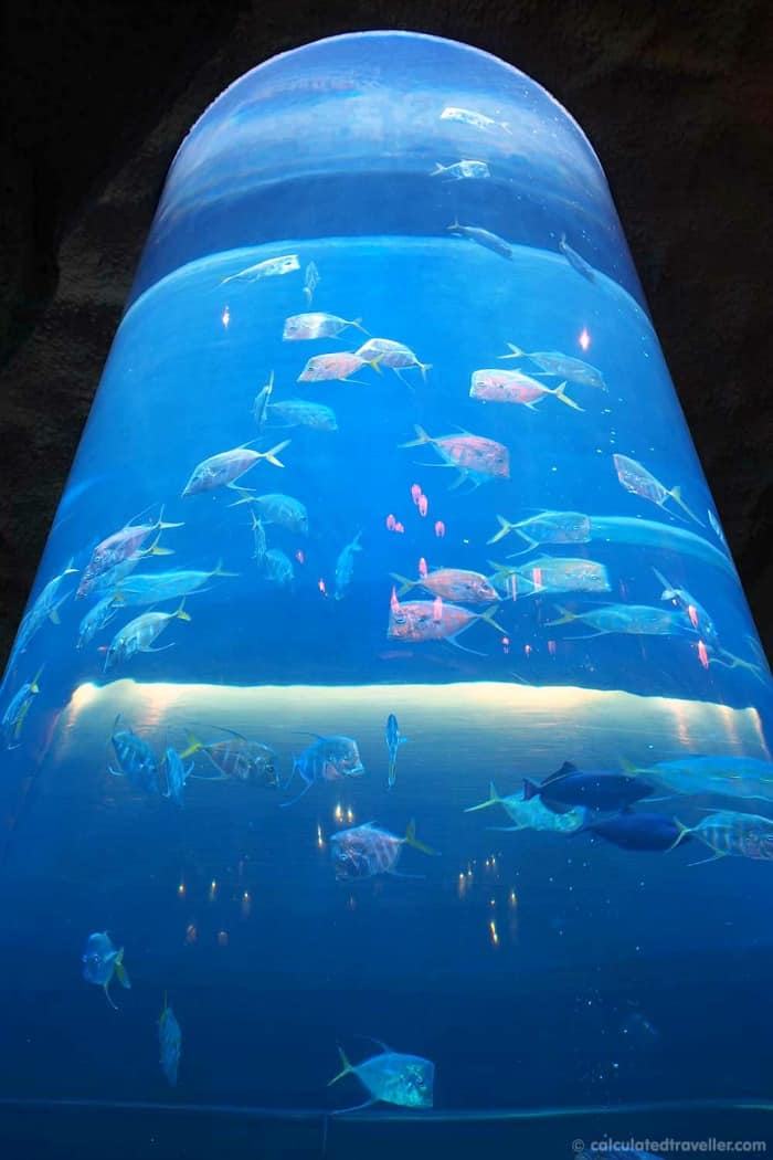 Downtown Aquarium Houston Moms Munchkins