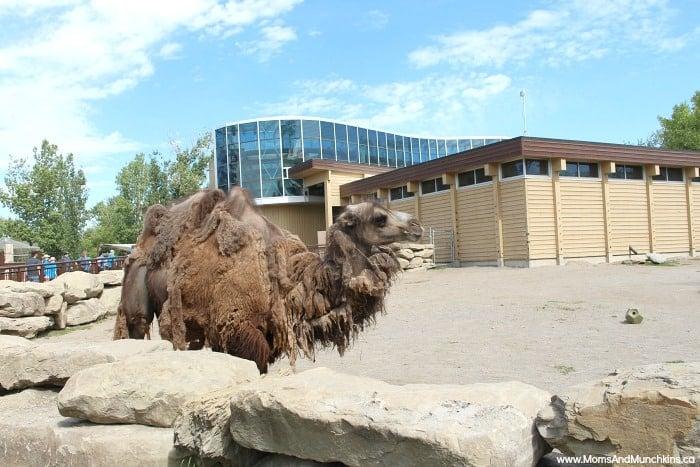 Calgary Family Attractions - Calgary Zoo