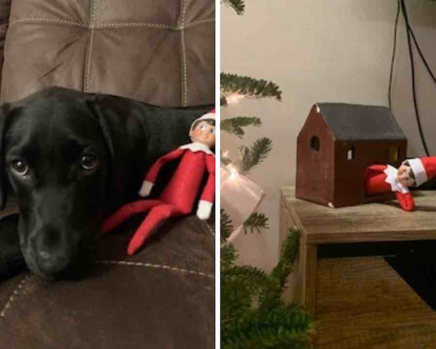 Elf relaxing with dog